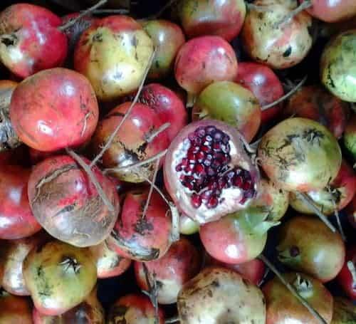 Pomegranates For Christmas Peter Sommer Travels